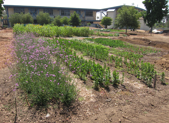 John Muir High School Farm