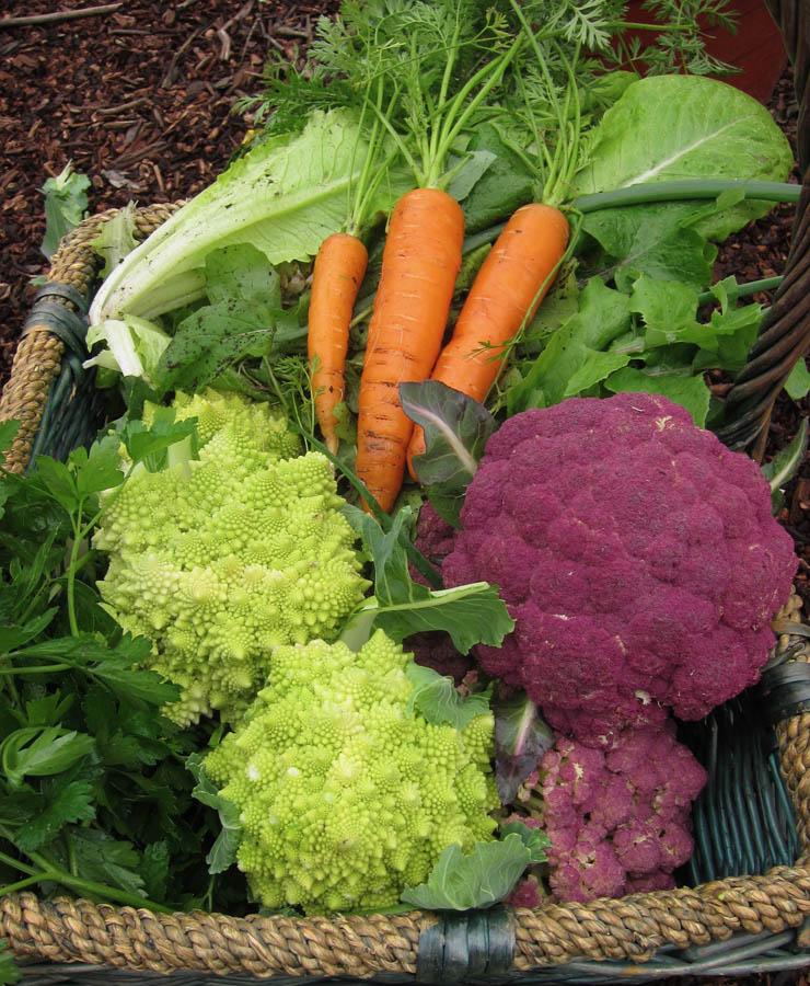 winter vegetable basket